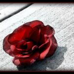 Creative Rose Grows From Concrete Photo252