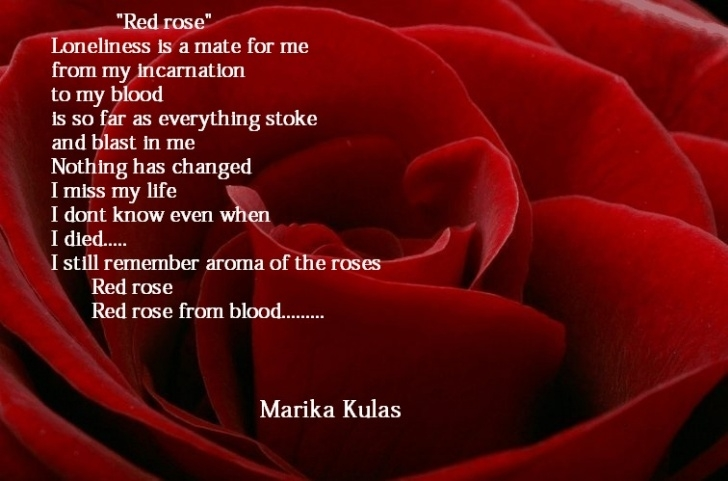 Creative Roses And Red Poem Pics997