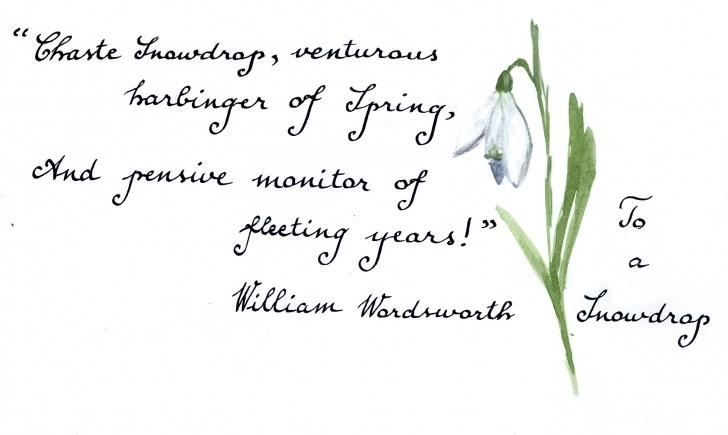 Creative Snowdrop Poem By Ted Hughes Pic579
