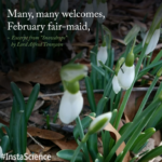 Creative Snowdrop Poem Tennyson Photo927