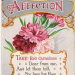 Creative The Red Flower Poem Pics602