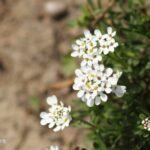 Creative The Tuft Of Flowers Photo374
