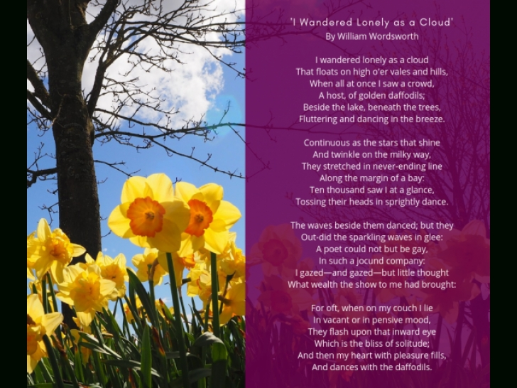 Creative To Daffodils Poem Photo210