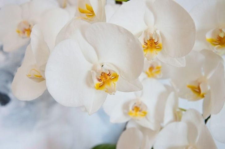 Creative White Orchid Poem Picture884