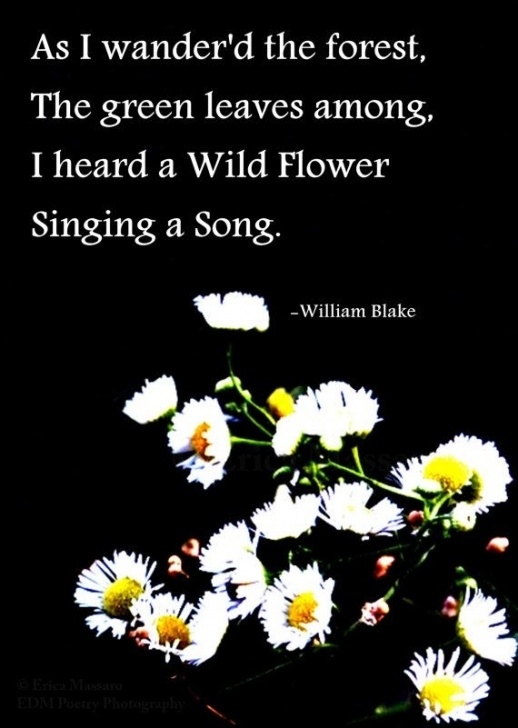 Creative William Blake Daffodils Pic493