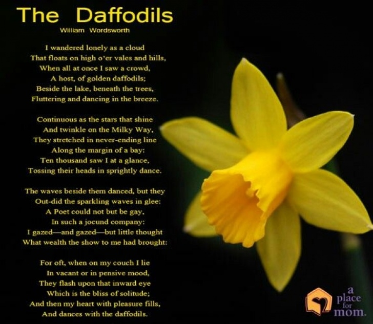 Famous Daffodil Flower Poem Pic663
