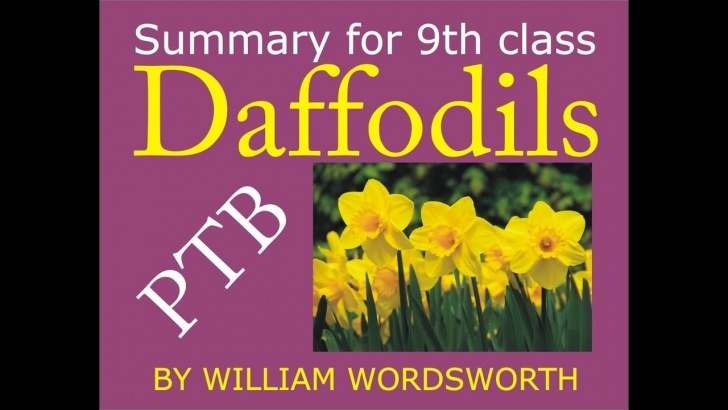 Famous Daffodils By Williams Wordsworth Picture003