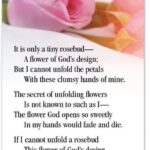 Famous Flower Petal Poems Photo840