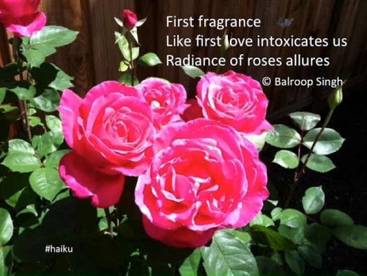 Famous Haiku About Flowers 5 7 5 Pic791