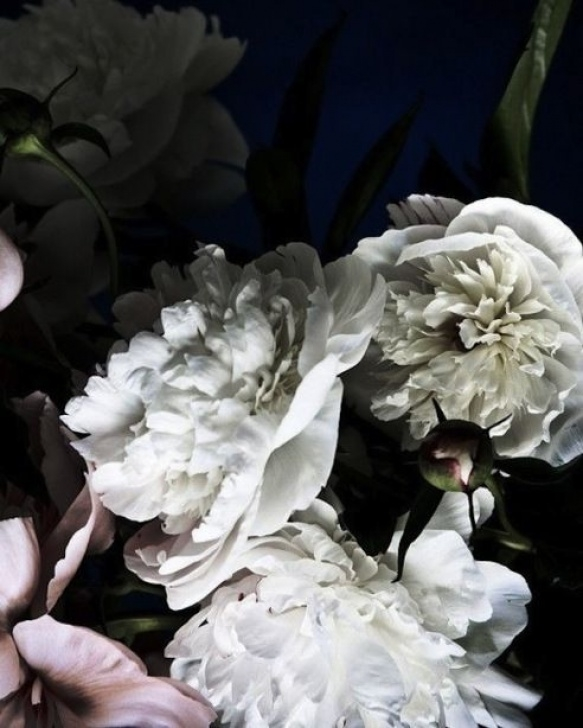 Famous Peony Poem By Mary Oliver Pic580