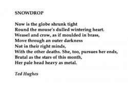 Famous Snowdrop Poem By Ted Hughes Image283