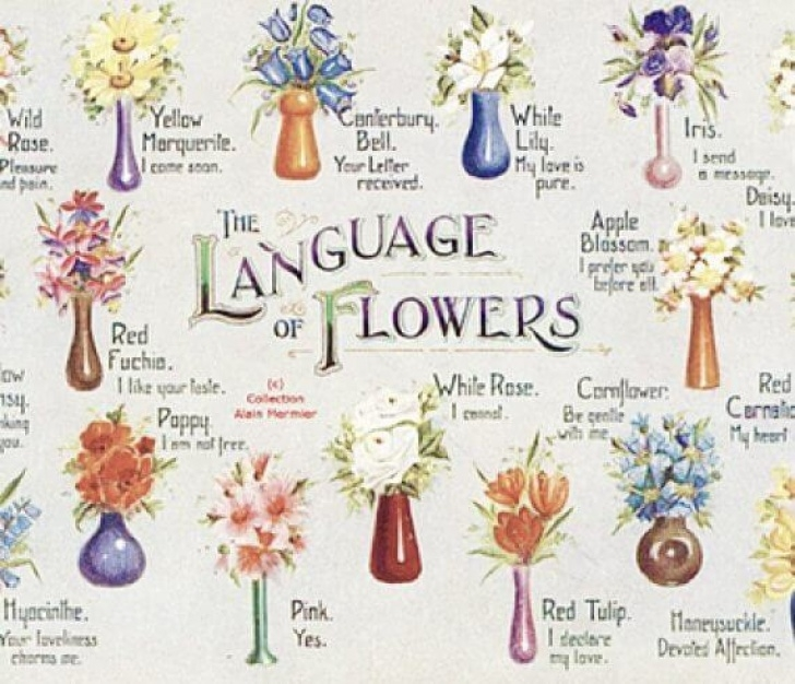 Fantastic Floral Poetry And The Language Of Flowers Pics249