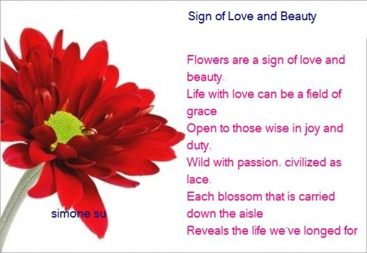 Fantastic Poem The Most Beautiful Flower Pic792