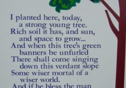 Fantastic Poems About Flowers Growing Pics365
