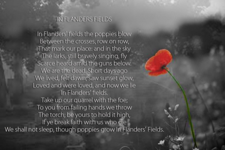 Fantastic Poppies Full Poem Image642