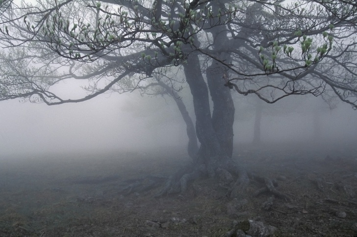 Fantastic Robert Frost Trees Photo158