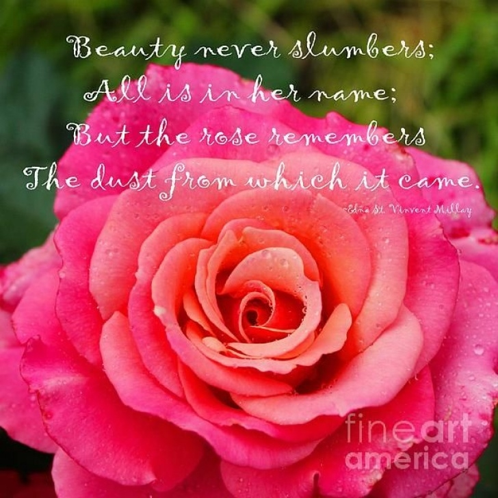 Fantastic Rose Flower Poem In English Image241