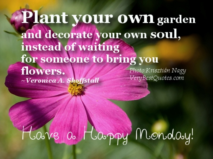 Fantastic So Plant Your Own Garden And Decorate Your Own Soul Image663