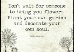 Fantastic So Plant Your Own Garden And Decorate Your Own Soul Picture974