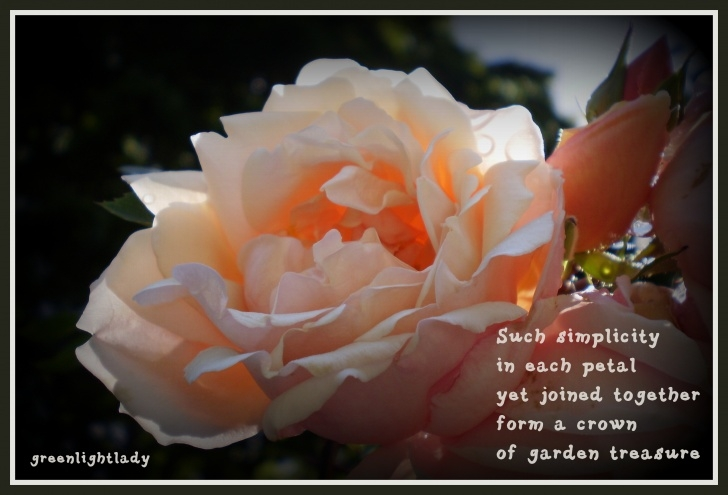Gorgeous About Flowers Poem Photo946