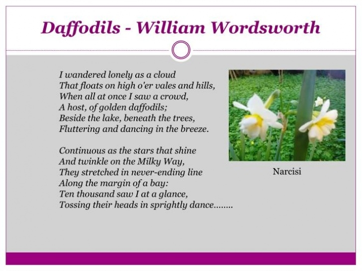 Gorgeous Daffodils By William Pic826