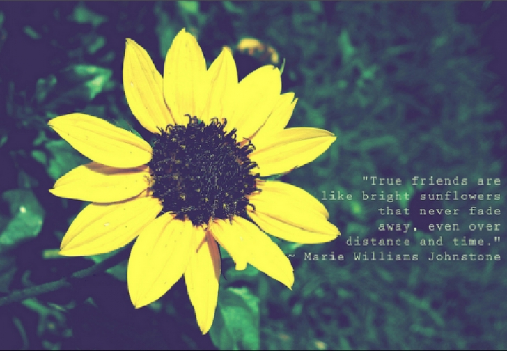 Gorgeous Famous Poems About Sunflowers Pic219