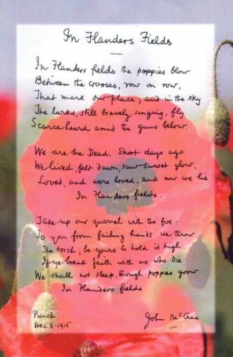 Gorgeous In Poppies Fields Poem Picture178