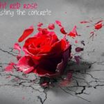 Gorgeous Long Live The Rose That Grew From Concrete Poem Pics586