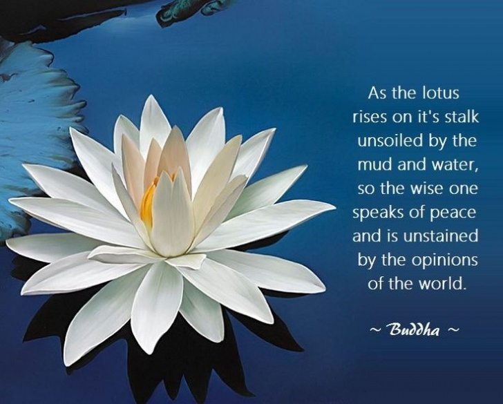 Gorgeous Poem The Lotus Picture085