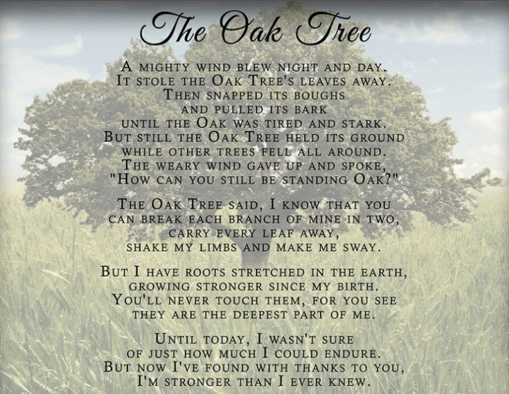 Gorgeous Poems About Trees And Growth Pic627