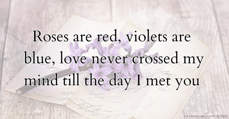 Gorgeous Rose Are Red Violets Are Blue Romantic Pic738