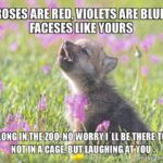 Gorgeous Roses Are Red Violets Are Blue Baby Pic643