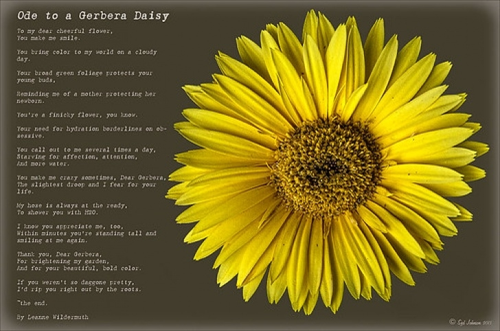 Gorgeous Sunflower Poem In English Picture297