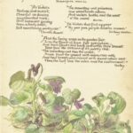 Gorgeous Sweet Violet Poem Image499