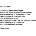 Gorgeous Ted Hughes Snowdrop Photo741