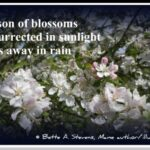 Great Famous Cherry Blossom Poems Pic506