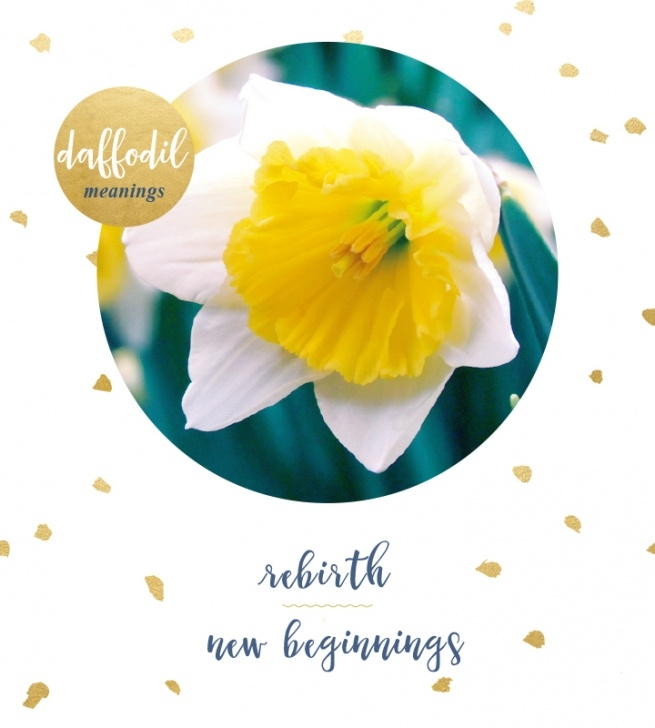 Great Full Poem Daffodils Picture306
