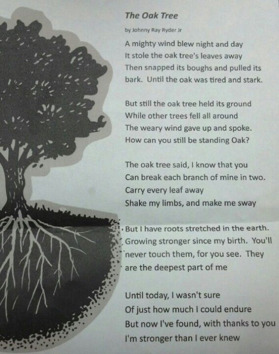 Great Oak Tree Poems Strong Pics728