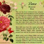 Great Poem About Rose Flower Photo330