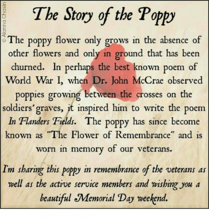 Great Poppies Full Poem Pic390