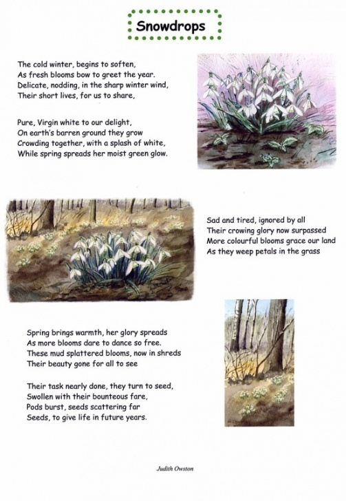 Great Snowdrop Poem By Ted Hughes Pic344