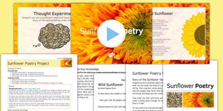 Great Sunflower Poem In English Pic525