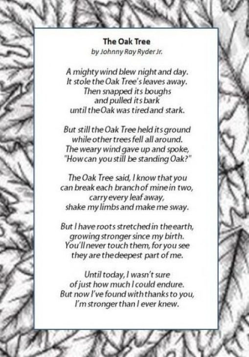 Great The Mighty Oak Tree Poem Photo533