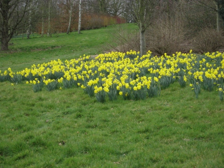 Great The Poem Of Daffodils Photo565
