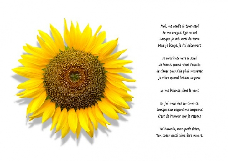 Great The Sunflower Poem Pics026