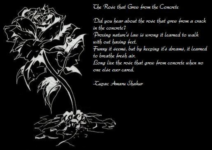 Great Tupac Poem Flower Concrete Picture755