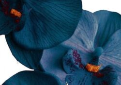 Great White Orchid Poem Photo282