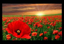 Greatest I Am The Flower In The Field Poem Picture720