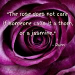 Greatest Poems About Roses And Thorns Image762