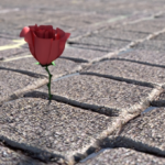 Greatest Rose Growing Out Of Concrete Poem Photo610